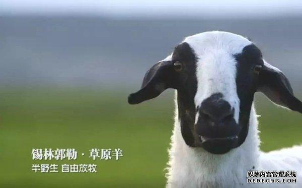 """""""锡林郭勒草原羊""""受到消费者纷纷问询"""